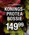 Konings Protea Bossie offer at R 149,99