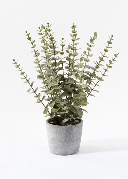 Artificial Eucalyptus in Cement Pot offers at R 349