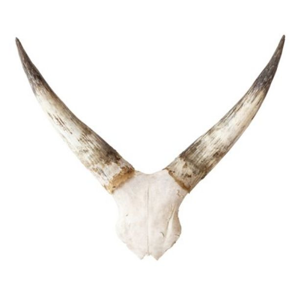Cowskull Plate offer at R 1497,5