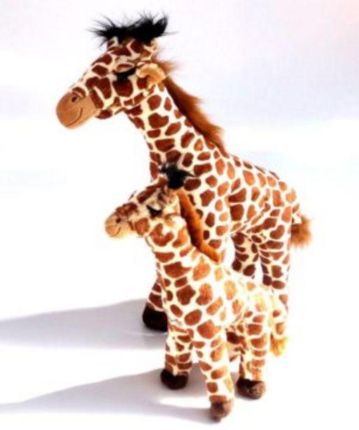 Born In Africa Giraffe Safari offers at R 319,9