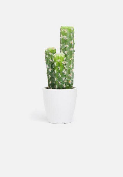 Saguaro mini potted cactus offers at R 77