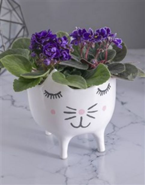 African Violets in Cat Pot offers at R 455